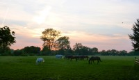 Some horses in a field as the sun sets behind trees on the horizon